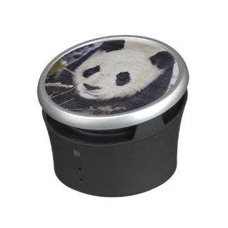 Asia, China, Sichuan Province. Giant Panda in 2 Speaker