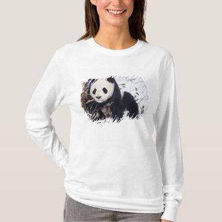 Asia, China, Sichuan Province. Giant Panda in 2 T-Shirt