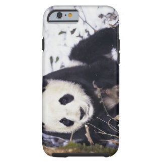 Asia, China, Sichuan Province. Giant Panda in 2 Tough iPhone 6 Case