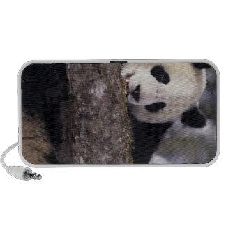 Asia, China, Sichuan Province. Giant Panda in Mini Speaker