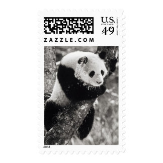 Asia, China, Sichuan Province. Giant Panda in Stamp