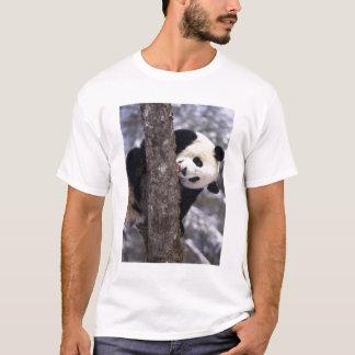 Asia, China, Sichuan Province. Giant Panda in T-Shirt