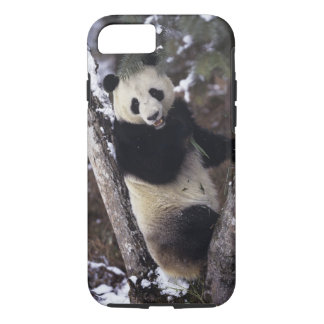 Asia, China, Sichuan Province. Giant Panda up a iPhone 8/7 Case