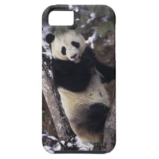 Asia, China, Sichuan Province. Giant Panda up a iPhone SE/5/5s Case