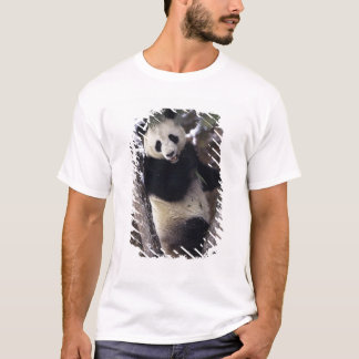 Asia, China, Sichuan Province. Giant Panda up a T-Shirt