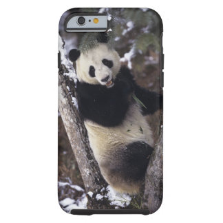 Asia, China, Sichuan Province. Giant Panda up a Tough iPhone 6 Case