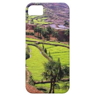 Asia, China, Yunnan, Honghe.  Las terrazas del arr iPhone 5 Cobertura