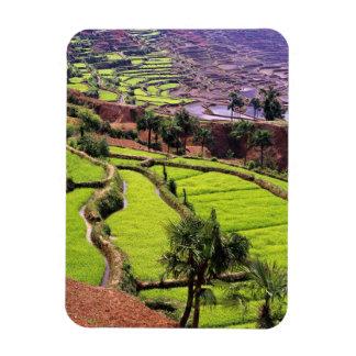 Asia, China, Yunnan, Honghe.  Las terrazas del arr Imán Flexible