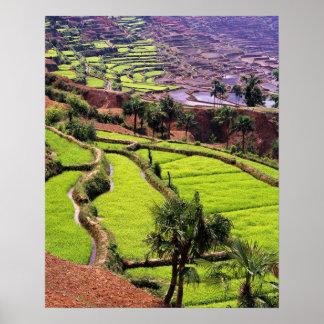 Asia, China, Yunnan, Honghe.  Las terrazas del arr Póster