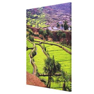 Asia, China, Yunnan, Honghe.  Rice terraces near 2 Canvas Print