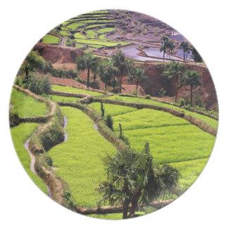 Asia, China, Yunnan, Honghe.  Rice terraces near 2 Melamine Plate