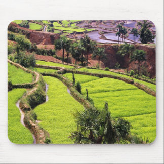 Asia, China, Yunnan, Honghe.  Rice terraces near 2 Mouse Pad