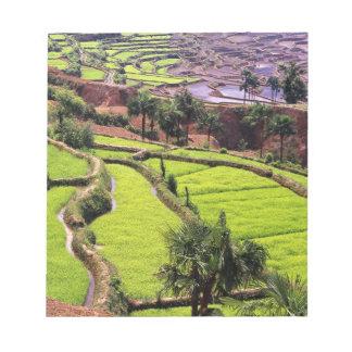 Asia, China, Yunnan, Honghe.  Rice terraces near 2 Memo Notepad