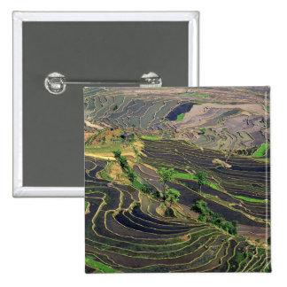 Asia, China, Yunnan, Honghe. Rice Terraces near Button