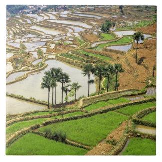 Asia, China, Yunnan, Honghe.  Rice terraces near Ceramic Tile