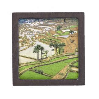 Asia, China, Yunnan, Honghe.  Rice terraces near Jewelry Box