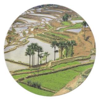 Asia, China, Yunnan, Honghe.  Rice terraces near Melamine Plate
