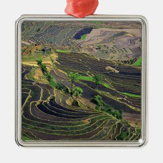 Asia, China, Yunnan, Honghe. Rice Terraces near Metal Ornament