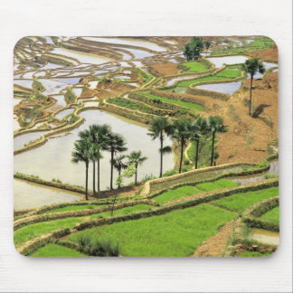 Asia, China, Yunnan, Honghe.  Rice terraces near Mouse Pad