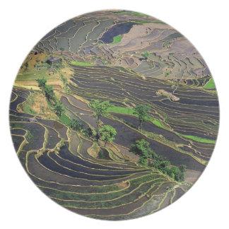 Asia, China, Yunnan, Honghe. Rice Terraces near Plate