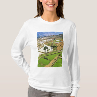 Asia, China, Yunnan, Honghe.  Rice terraces near T-Shirt