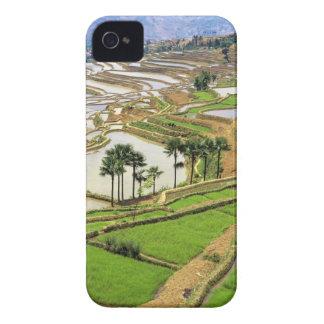 Asia, China, Yunnan, Honghe.  Terrazas del arroz c iPhone 4 Case-Mate Cárcasa