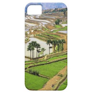 Asia, China, Yunnan, Honghe.  Terrazas del arroz c iPhone 5 Cárcasas