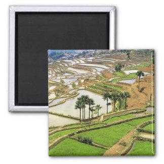 Asia, China, Yunnan, Honghe.  Terrazas del arroz c Imán Cuadrado