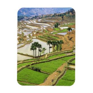 Asia, China, Yunnan, Honghe.  Terrazas del arroz c Imanes Rectangulares