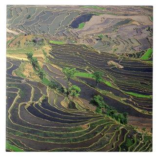 Asia, China, Yunnan, Honghe. Terrazas del arroz ce Azulejo Cuadrado Grande