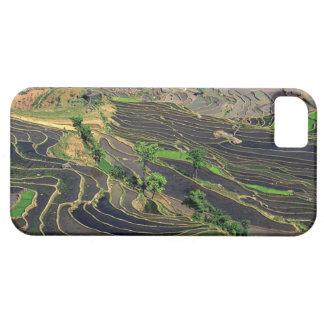 Asia, China, Yunnan, Honghe. Terrazas del arroz ce iPhone 5 Protectores