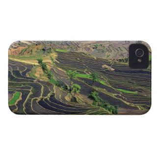 Asia, China, Yunnan, Honghe. Terrazas del arroz ce iPhone 4 Cárcasa