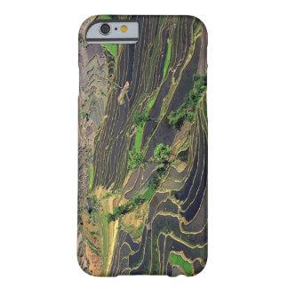 Asia, China, Yunnan, Honghe. Terrazas del arroz Funda Barely There iPhone 6