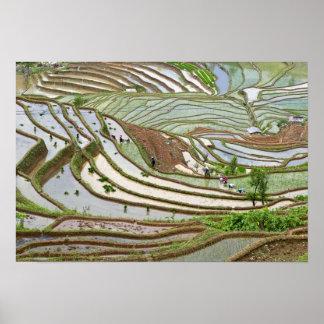 Asia, China, Yunnan, Jinping. Gente nativa de Yi Póster