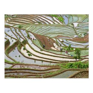 Asia, China, Yunnan, Jinping. Native Yi people Postcard