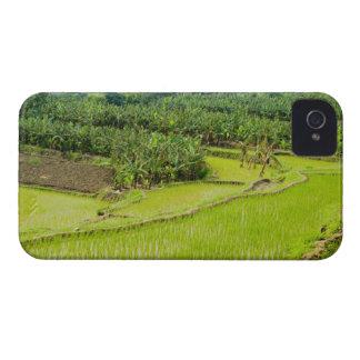 Asia, China, Yunnan Province, Honghe. Banana iPhone 4 Case