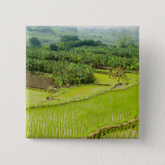 Asia, China, Yunnan Province, Honghe. Banana Pinback Button