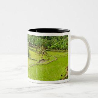 Asia, China, Yunnan Province, Honghe. Banana Two-Tone Coffee Mug