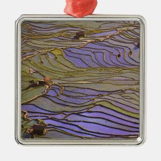 Asia, China, Yunnan Province, Yuanyang. Flooded Metal Ornament