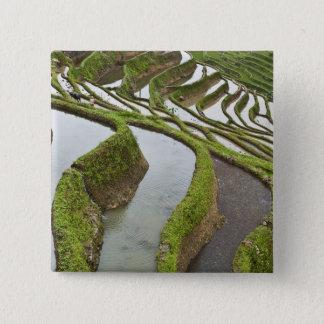 Asia, China, Yunnan, Yuanyang. Flooded rice Button