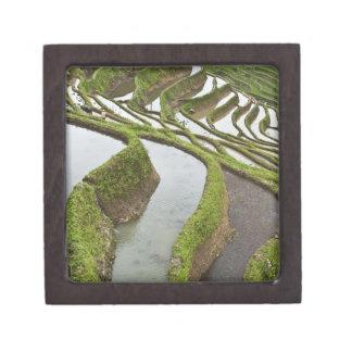 Asia, China, Yunnan, Yuanyang. Flooded rice Jewelry Box