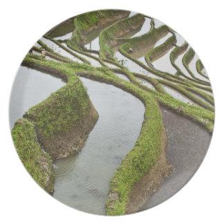Asia, China, Yunnan, Yuanyang. Flooded rice Plate