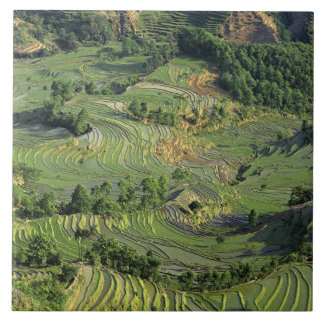 Asia, China, Yunnan, Yuanyang. Modelo del verde 2 Azulejo Cerámica