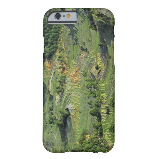 Asia, China, Yunnan, Yuanyang. Modelo del verde 2 Funda De iPhone 6 Barely There