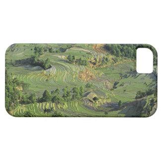 Asia, China, Yunnan, Yuanyang. Modelo del verde 2 iPhone 5 Case-Mate Coberturas