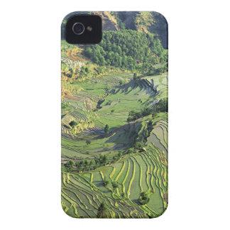 Asia, China, Yunnan, Yuanyang. Modelo del verde iPhone 4 Cobertura