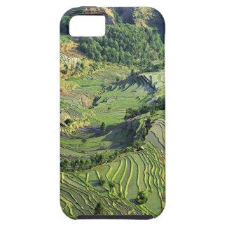 Asia, China, Yunnan, Yuanyang. Modelo del verde iPhone 5 Carcasa