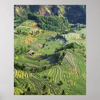 Asia, China, Yunnan, Yuanyang. Modelo del verde Póster