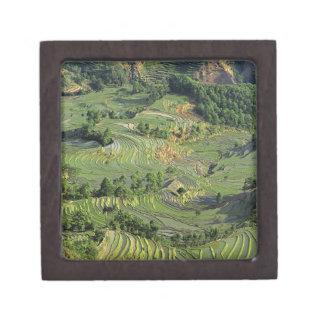 Asia, China, Yunnan, Yuanyang. Pattern of green 2 Jewelry Box