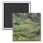 Asia, China, Yunnan, Yuanyang. Pattern of green 2 Refrigerator Magnet